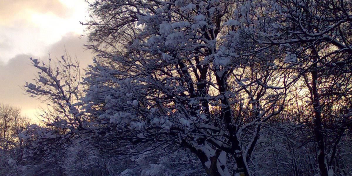 Waldwiese im Schnee mit Bäumen, deren schneebedeckte schwarze Äste sich vor dem Winterhimmel abheben