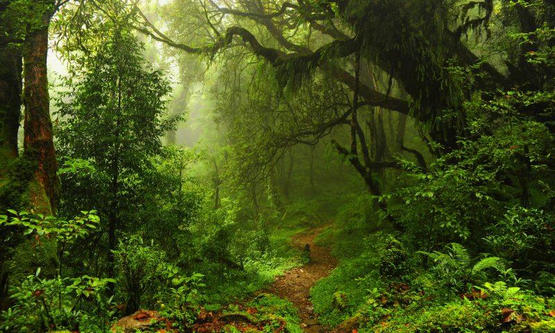 Licht im Förderdschungel