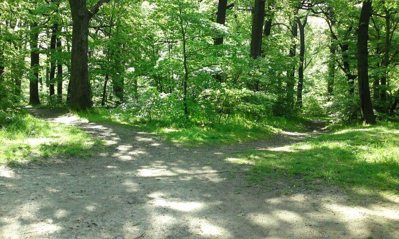Wegkreuzung im Wald mit mehreren abgehenden Wegen