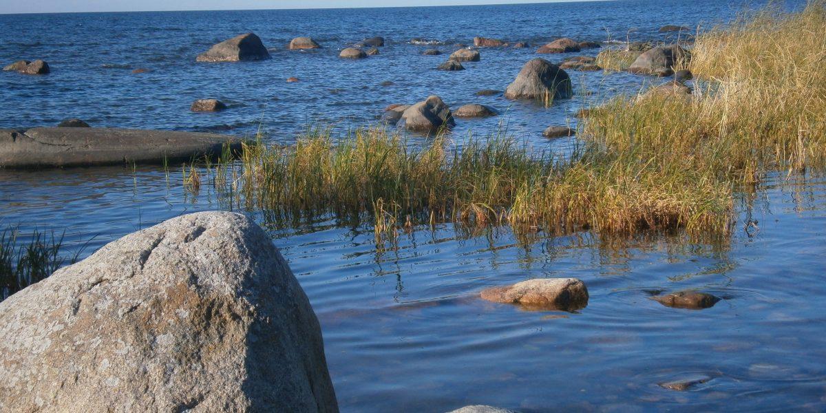 Meeresufer im Baltikum mit Felsen und Schilf
