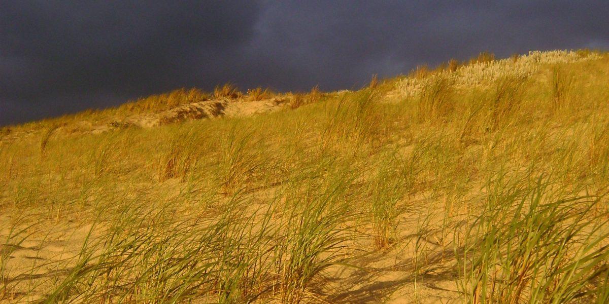 gelb leuchtende Dünen vor Gewitterhimmel