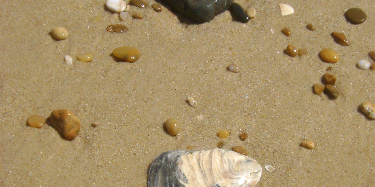 nasse Steine unterschiedlilcher Farbe und Form, die im Sand in Ufernähe liegen