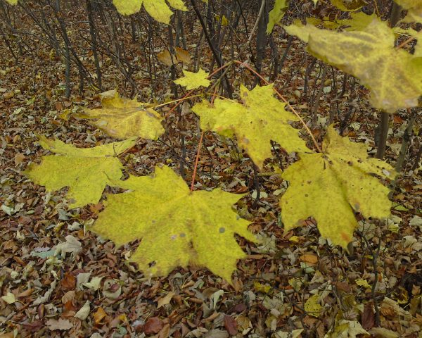 Die Blätter fallen...