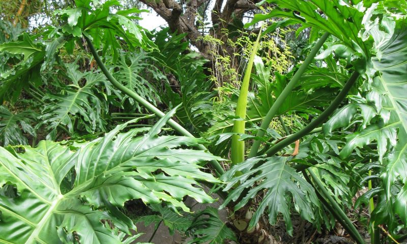 Licht im Förderdschungel exotischer Pflanzendschungel