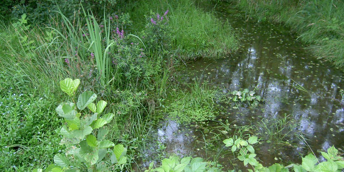 Tümpel mit blühenden Pflanzen bei sanftem Regen
